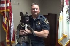 COURTESY OF ELGIN POLICE DEPARTMENTElgin Police Chief Jeff Swoboda and his French bulldog Fonzie made an April Fools' Day video that the department posted on Facebook saying Fonzie was the department's newest K9 member.
