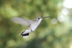 Attract Hummingbirds with These 3 Native Colorado Plants!