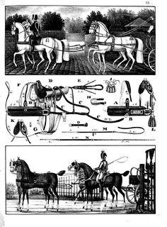 "Complément à l'article ""Le régulateur du sellier"". Horse Drawn, Horses, Tack, Poster, Draft Horses, Argentina, Embroidered Clothes, Side Dishes, Horse Tack"
