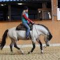 Ohio Dream, buckskin stallion - Riverside Curly Horse Ranch - Europa's größte Curly Zucht