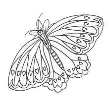 Butterfly Coloring Page With A Little Imagination Color This