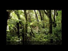 A Journey through New Zealand  Another favorite song by Amici Forever