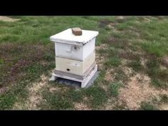 Bait Hive, the easiest way to catch a swarm - Bee Vlog #90 - Apr 25, 2013 - YouTube