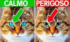 10 sinais que seu animal precisa de ajuda >> https://www.tediado.com.br/09/10-sinais-que-seu-animal-precisa-de-ajuda/