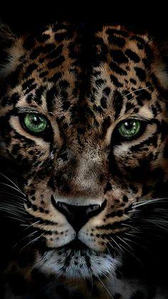 island of silence - Tiere - Gatos Leopard Tattoos, Tier Wallpaper, Animal Wallpaper, Nature Animals, Animals And Pets, Cute Animals, Beautiful Cats, Animals Beautiful, Gorgeous Eyes