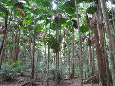 jungle tree - חיפוש ב-Google