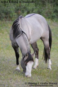 AQHA Grulla Mares - Shining C Grulla Horses - Reining in Diamonds