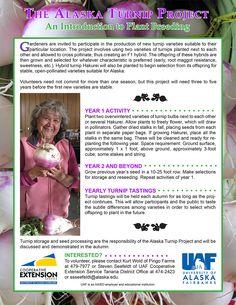 Participate in local turnip-growing trials!