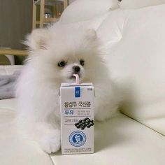 Marvelous Pomeranian Does Your Dog Measure Up and Does It Matter Characteristics. All About Pomeranian Does Your Dog Measure Up and Does It Matter Characteristics. Cute Puppies, Cute Dogs, Dogs And Puppies, Cute Babies, Doggies, Cute Baby Animals, Animals And Pets, Funny Animals, I Love Dogs