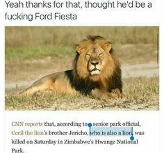 """Sg Yeah Thanks For That, Thought He'd Be A Fucking Ford Fiesta Cnn Reports That, According To Senierpark ."""" Cw"""" The Lion's Brother Jericho. Killed On Saturday In Zimbabwe's Hwange National Park. Funny Pictures Tumblr, Male Lion, Weird News, Kruger National Park, Photos Of The Week, Super Funny, The Funny, Mammals, Animals And Pets"""