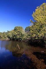 The Chattahoochee River in Columbus, Ga.