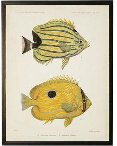 Vintage Illustration Art, Fish Illustration, Natural Form Art, Jellyfish Art, Fish Drawings, Marine Fish, Fish Print, Fauna, Botanical Prints