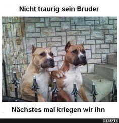 Nicht traurig sein Bruder.. | Lustige Bilder, Sprüche, Witze, echt lustig