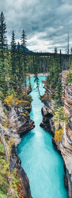 Athabasca Canyon in Jasper National Park! 10 Amazing Things To See And Do In Alberta, Canada! Explore the Columbia Icefields | Banff National Park | Lake Abraham | Lake Louise | Peyto Lake and so much more! #avenlylanetravel #canada #alberta
