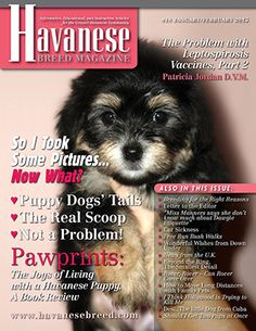 Havanese Breed Magazine - Print-Subscribe