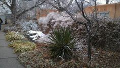 Anna's side garden under light dusting of snow. ABQ