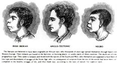 """An illustration from the influential American magazine Harper's Weekly shows an alleged similarity between """"Irish Iberian"""" and """"Negro"""" features in contrast to the higher """"Anglo-Teutonic. Irish American, American History, American Women, Modern History, Black History, European History, Yellow Peril, 14 Year Old Girl, Irish Leprechaun"""