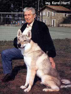 Karel Hartl Husky, Dogs, Animals, Wolf Dogs, Animales, Animaux, Pet Dogs, Doggies, Animal