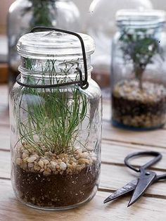 Vintage mason jars make great containers   for a kitchen herbarium. Almost any herb can be started from seed in a mason   jar. Chive, thyme and rosemary are excellent choices.