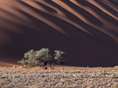 http://as-cosy-as-can-be.tumblr.com/post/137481504022/unrar-namib-naukluft-national-park-namibia