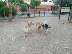Juegos en el parque canino 10/16 Monty, Brown, Robin