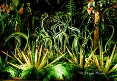 Black and Green Striped Herons with Icicle Clusters - Chihuly Glass Art, 2015 Art Of Glass, Stained Glass Art, Atlanta Botanical Garden, Botanical Gardens, Fire Art, Diy Art Projects, Glass Texture, Through The Looking Glass, Outdoor Art