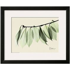 Art.com Sage Eucalyptus Leaves I Matted Framed Wall Art (395 AUD) ❤ liked on Polyvore featuring home, home decor, wall art, green, horizontal wall art, leaves wall art, green home decor, framed leaves wall art and leaf home decor