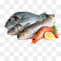 fish,shrimp,aquatic,fruit,fish clipart Best Camera For Photography, Fish Clipart, Green Screen Backgrounds, 3d Text, Islamic Art Calligraphy, Summer Fruit, Sea Food, Clipart Images, Fish Recipes