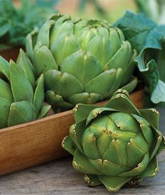 "Artichoke, Green Globe. Perennial produce 3-4"" edibly tender flowerheads in 18 months. With thick, fleshy scales and solid center, the flower heads should be harvested when they're young. Native to the Mediterranean, grown in the US since Colonial times. Thomas Jefferson raised these at Monticello, as early as 1767. With protective cover artichokes will successfully overwinter in colder areas. I have to grow these with  herbs for their edible and architectural interest! www.burpee.com"