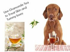 14 Pet Home Remedies From Your Kitchen Pet Insurance Reviews, Cheap Pet Insurance, Health Insurance, Dog Breath, Rescue Puppies, Chamomile Tea, Chihuahua Love, Healthy Pets, Pet Treats