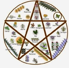 Wiccan Garden Design Merry Meet :))))) I love love love Pinterest as many of you know. :))) I find soooo many cool ideas there! Above is a diagram I found for a Wiccan Garden! I am a little late getting started this year as there's been soooo much going on, but we may try something like this. :)))) Is it not amazing? :)))) I love growing herbs, as there are just soooo many things to do with them and the majority of them come back each year. If you start with seeds in the spring, I can see…