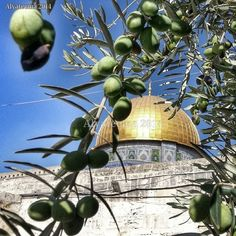 ♥ World's Most Beautiful, Beautiful Places, Allah, Israel, Palestine Art, Rare Historical Photos, Dome Of The Rock, How He Loves Us, Islamic Architecture