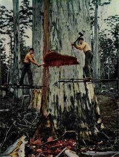 Lumberjacks in Alaska, US.