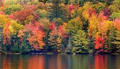 Fall tree - Yahoo Image Search Results Autumn Trees, Yahoo Images, Image Search, Northern Lights, River, Fall, Painting, Outdoor, Fall Trees