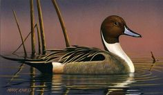 Pintail Drake2009 Iowa Duck Stamp -Migratory Waterfowl Stamps (Duck Stamps)by Mark Kness