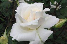 white  photo By  Mireia Cano Vazquez