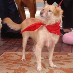 Harry is the sweetest, happiest little guy, probably a Pomeranian/terrier mix.  He loves to play!
