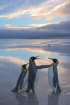 Penguinsss