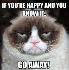 20 of the funniest grumpy cat memes - funny cat memes - . - 20 of the funniest grumpy cat memes You are in the right place abou - Grumpy Cat Quotes, Funny Grumpy Cat Memes, Cat Jokes, Funny Cats, Funny Memes, 9gag Funny, Funny Captions, Videos Funny, Funny Animal Clips