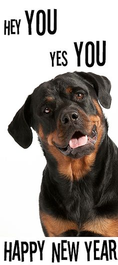 Happy new year  Rottweiler Djeena