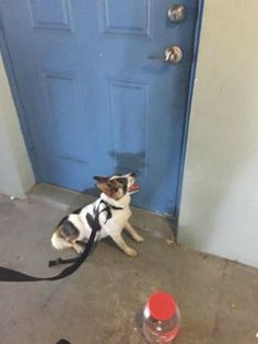 dog-left-abandoned-at-door. He has been rescued by 100+ abandoned dogs but they are asking for help for his vet needs. You can donate by clicking here: https://www.paypal.com/us/cgi-bin/webscr?cmd=_flow&SESSION=wiS61zp2XADzkFKW_O0Bs8a0cuUcALmLJxj3l4Sd3CjZrBr-YXE5oXWiUOW&dispatch=5885d80a13c0db1f8e263663d3faee8d4fe1dd75ca3bd4f11d72275b28239088