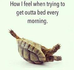 HOW I FEEL TRYING TO GET OUT OF BED EVERY MORNING ... - http://www.razmtaz.com/how-i-feel-trying-to-get-out-of-bed-every-morning/