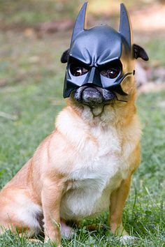 Batdog is coming for you! (and some other animals with props will do to if you click the pic)