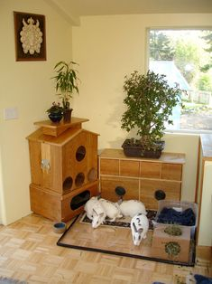 A new housing option is now available to rabbit owners! For those who want to keep their home looking classy, RabbitHouses.net offers beautiful wooden enclosures for your house rabbit that complement the furniture in your home. They are multi-storied, and they come with an opening roof for upstairs, a grass den downstairs for relaxing, a … Read more »