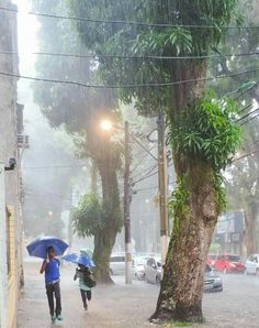 Cidade das mangueiras e das chuvas - Belém PA.
