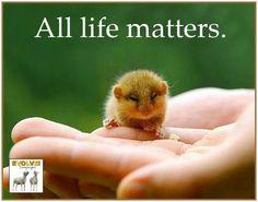 ALL life matters & ALL feel ♡ Elephant Shrew, Reasons To Go Vegan, Respect Life, Vegan Quotes, Veggie Tales, Vegan Animals, Vegan Beauty, Vegan Lifestyle, Animal Quotes
