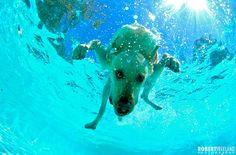 dog underwater