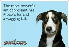 Who needs bullshit pills like Paxil, Prozac, Zoloft, etc when you have a dog?