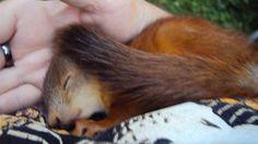 squirrel part 5