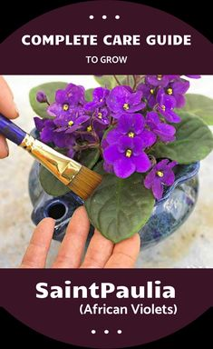 Best 12 Complete Care Guide To Grow SaintPaulia (African Violets) Outdoor Plants, Outdoor Art, Orchids In Water, Violet Plant, Growing Plants Indoors, Saintpaulia, Small Plants, Plant Care, Gardening Tips